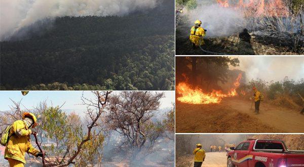 El incendio en el Nevado de colima arrasa con 11 mil hectáreas.